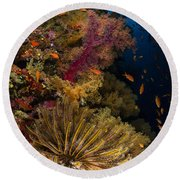 Diver Swims By Soft Corals And Crinoid Round Beach Towel