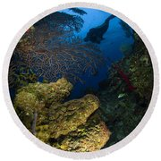 Diver Swims Over A Reef, Belize Round Beach Towel