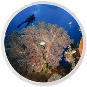 Diver Swims Over Sea Fans, Indonesia Round Beach Towel