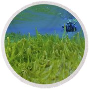 Diver With Fluorescent Green Algae Round Beach Towel