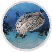 Divers Photographing A Giant Grouper Round Beach Towel