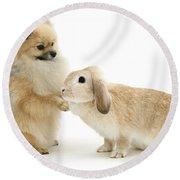 Dog And Rabbit Round Beach Towel