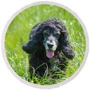Dog On The Grass Round Beach Towel