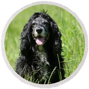 Dog Sitting On The Green Grass Round Beach Towel