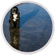 Dog With Reflections And Shadow Round Beach Towel