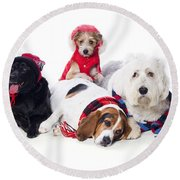 Dogs Wearing Winter Accessories Round Beach Towel
