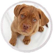 Dogue De Bordeaux Puppy Round Beach Towel