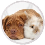 Dogue De Bordeaux Puppy With Bunny Round Beach Towel