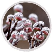 Dogwood Blooms - Sealed In Ice Round Beach Towel