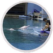 Dolphin And Trainer At The Underwater World In Sentosa In Singap Round Beach Towel