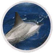 Dolphin Escort Round Beach Towel