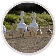 Domestic Geese With Goslings Round Beach Towel