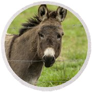 Donkey - The Beast Of Burden Round Beach Towel
