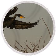 Double Crested Cormorant Coming Round Beach Towel