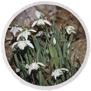 Double Snowdrops Squared Round Beach Towel