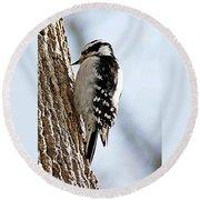 Downy Woodpecker 4 Round Beach Towel