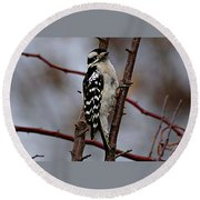 Downy Woodpecker 7 Round Beach Towel