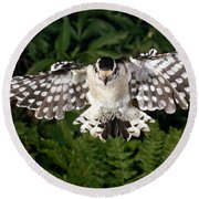 Downy Woodpecker In Flight Round Beach Towel