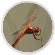 Dragonfly - Dodger Round Beach Towel