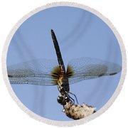Dragonfly - Handstand Round Beach Towel