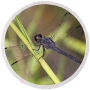 Dragonfly - Little Boy Blue Round Beach Towel