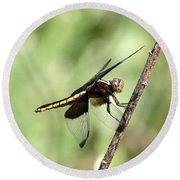 Dragonfly - Yellow Stripe Round Beach Towel