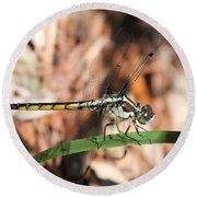 Dragonfly Closeup Round Beach Towel