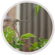 Dragonfly In Nature Round Beach Towel
