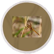Dragonfly Looking At You Round Beach Towel