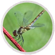 Dragonfly On A String Round Beach Towel
