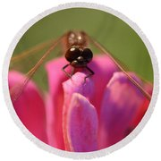 Dragonfly On Pink Flower Round Beach Towel