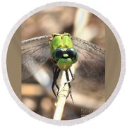 Dragonfly Perspective Round Beach Towel by Carol Groenen