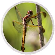 Dragonfly Photo - Yellow Dragon Round Beach Towel