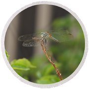 Dragonfly Smile Round Beach Towel