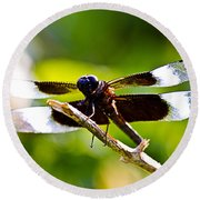 Dragonfly Stalking Round Beach Towel