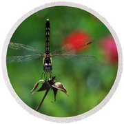 Dragonfly Summer Round Beach Towel