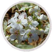 Dreams Of Pear Blossoms Round Beach Towel