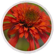 Dreamy Hot Papaya Coneflower Bloom Round Beach Towel