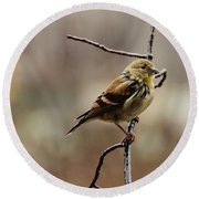 Drenched Finch Round Beach Towel