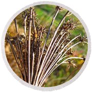Dry Queen Anns Lace I Round Beach Towel