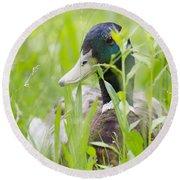 Duck In The Green Grass Round Beach Towel