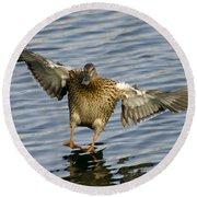 Duck Landing Round Beach Towel