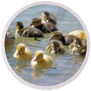 Ducklings 09 Round Beach Towel