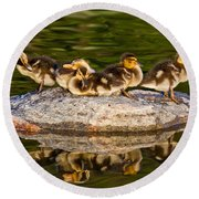 Ducklings Catch Some Rays Round Beach Towel