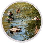 Ducks On The Water Round Beach Towel