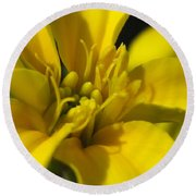 Dwarf French Marigold In Disco Yellow Round Beach Towel