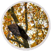 Eagle In Autumn Round Beach Towel