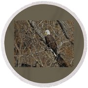 Eagle In Tree 3 Round Beach Towel