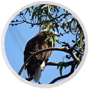 Eagle Under Cover Round Beach Towel
