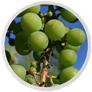 Early Grapes Round Beach Towel